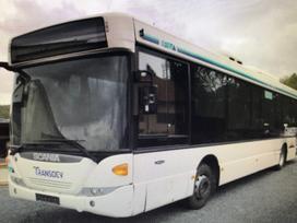 Scania Omniling, autobusai